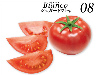 糖度08度 高糖度フルーツトマト ビアンコ