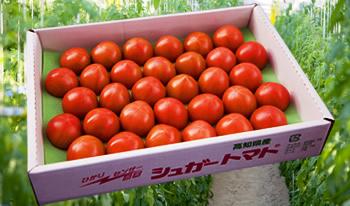 シュガートマト大セット