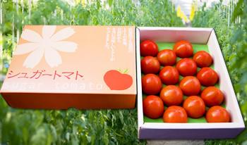 シュガートマト小セット