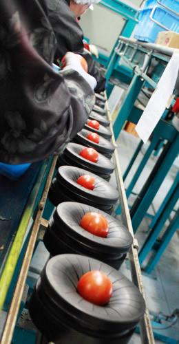 光センサーによる正確なトマトの選別