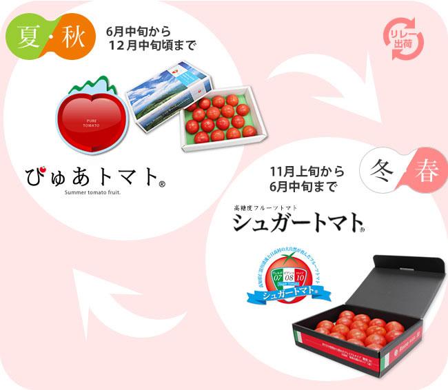 一年中おいしいフルーツトマトをお届け致します