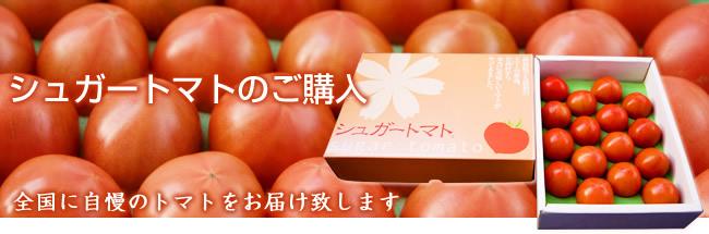 全国に自慢のトマトをお届け致します