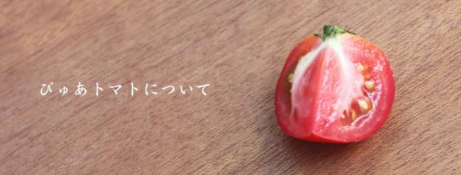 ぴゅあトマトについて